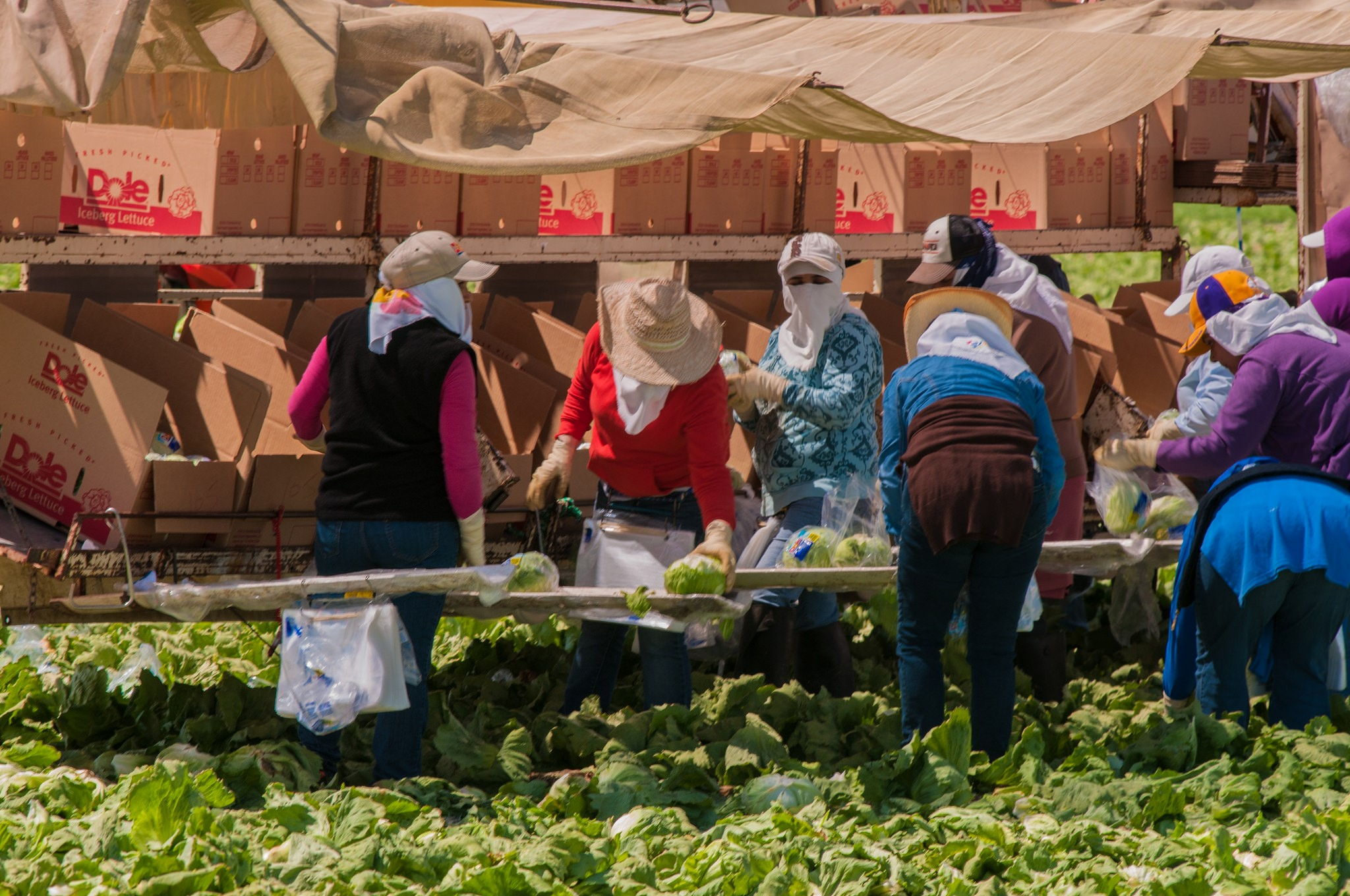 women farmworkers in the field