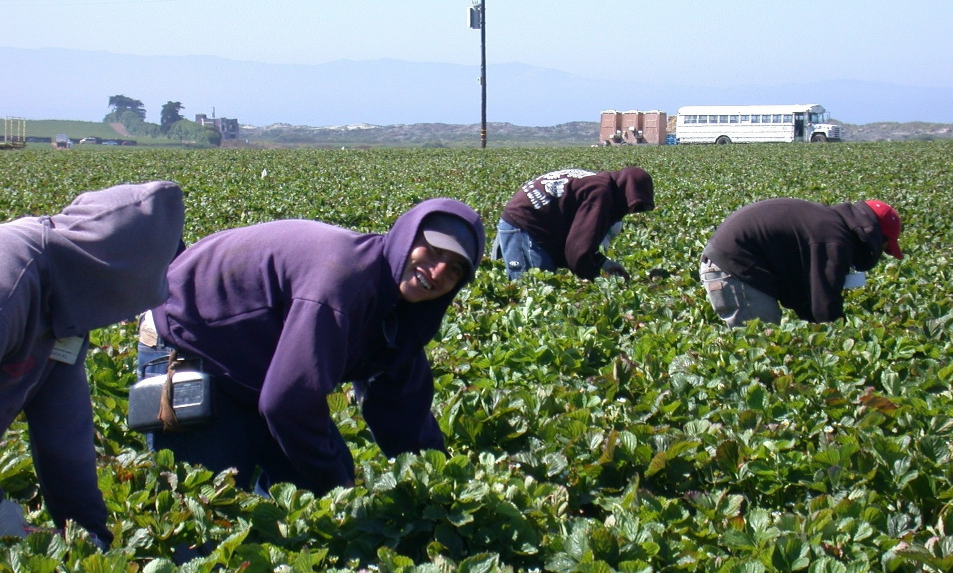 Young farmworkers working in field