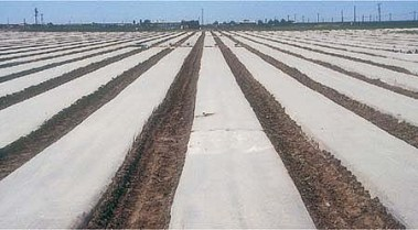 Ag fields wrapped in plastic for biosolarization