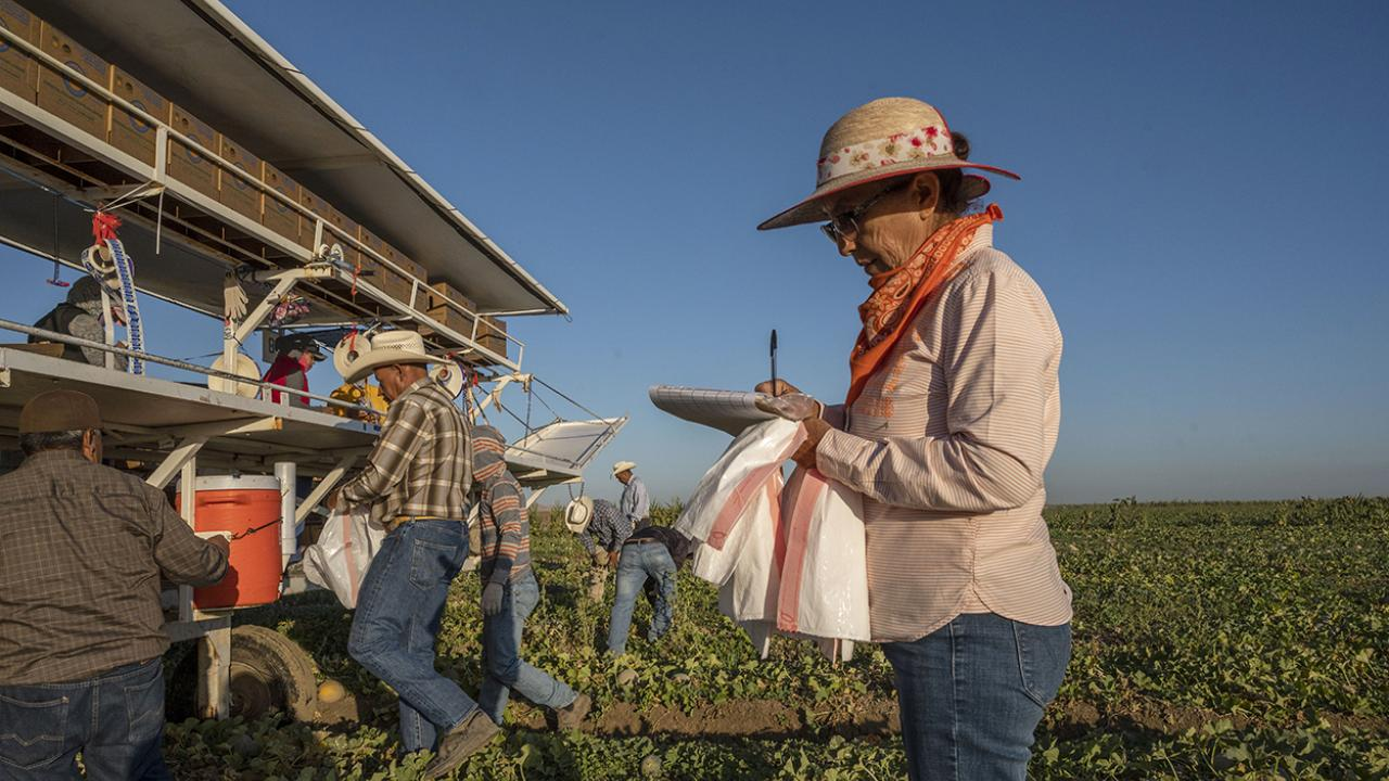 A female supervisor takes notes while farmworkers harvest melons