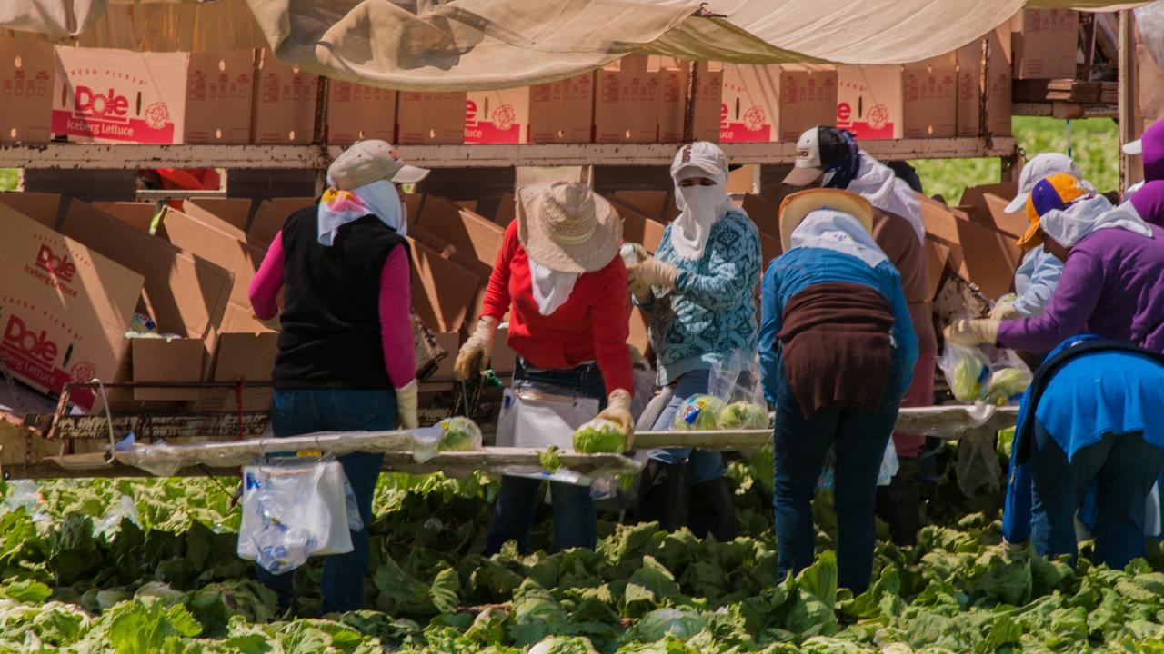 Women farmworkers