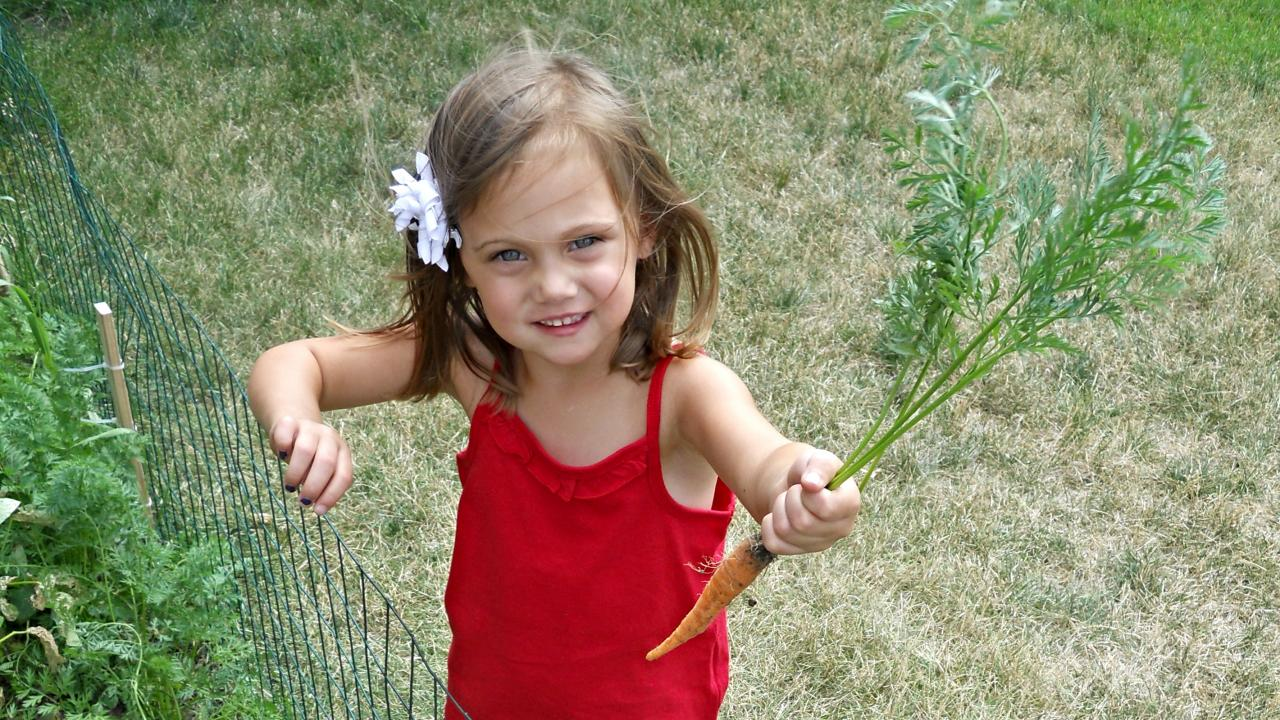 Young girl holding freshly pulled carrot