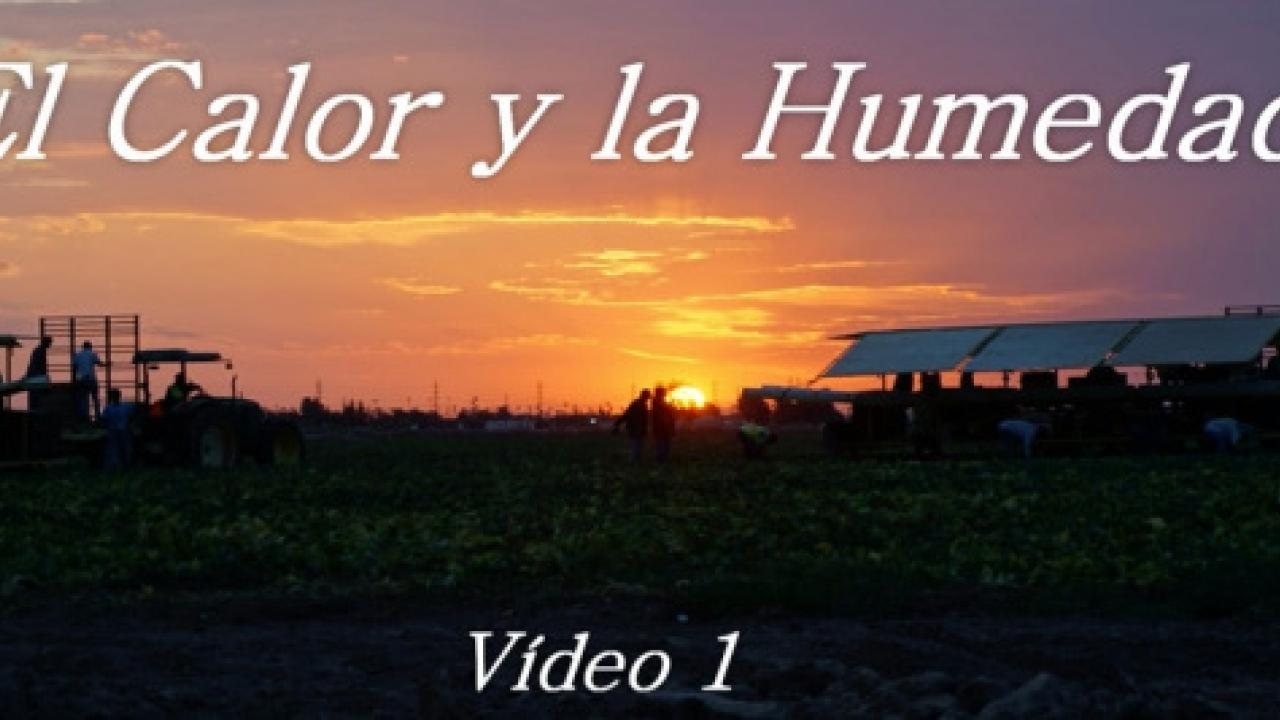 Still from El Calor y la Humedad video