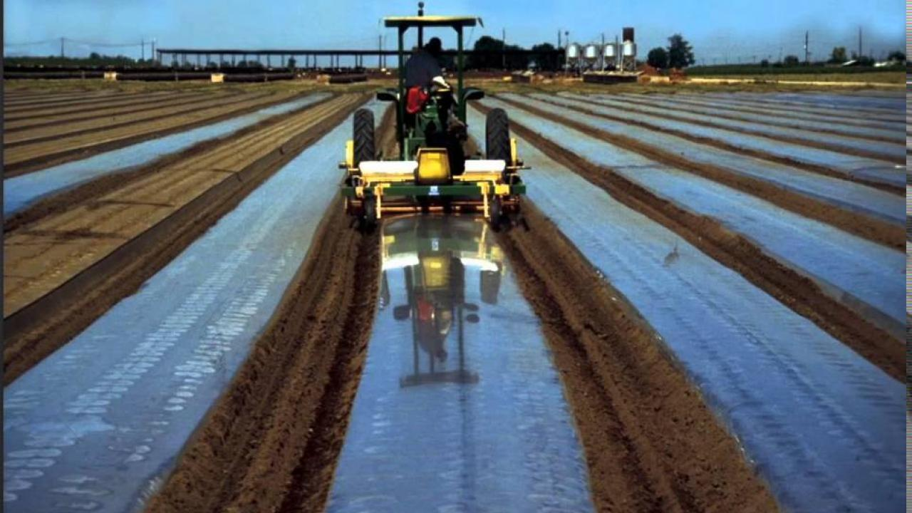 Tractor prepares field with biosolarization plastic