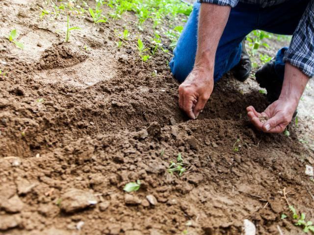 man planting seeds in the ground