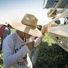 Farmworker takes a drink of water