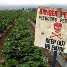 Pesticide Danger Sign